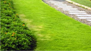 Subscription maintenance of gardens in the area of Marbella and Malaga, Spain